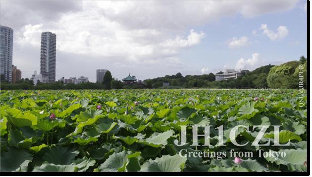 QSL@JR4PUR #044 - Shinobazu Pond, Ueno