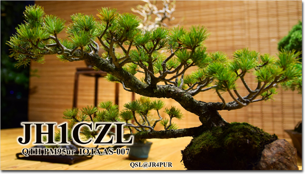 QSL@JR4PUR #199 - Bonsai