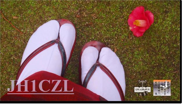 QSL@JR4PUR #344 - Camellia Japonica