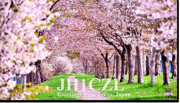 QSL@JR4PUR #365 - Cherry Blossom
